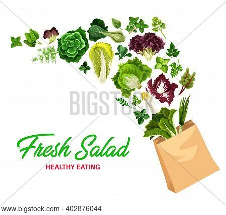 Greenery Salads And Fresh Greens, Vector Lettuces In Shopping Bag. Arugula, Chicory And Spinach, Wat