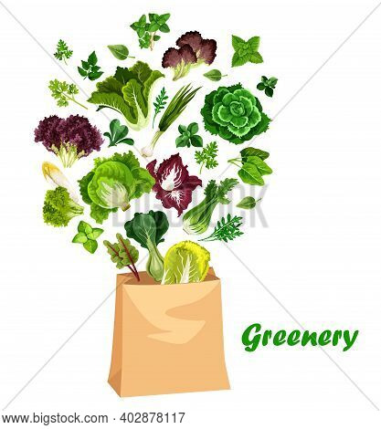 Greenery Salads And Greens, Vector Lettuces In Shopping Bag. Arugula, Chicory And Spinach, Watercres