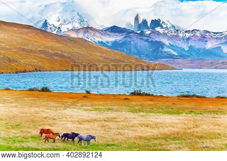 Lagoon Azul is mountain lake near three rocks - torres. The mountain range is covered with eternal snow. The Torres del Paine park in Chile. Herd of wild horses graze on the yellow grass