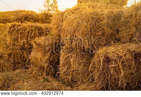 Dry Straw Bale. Pile Of Stacked Yellow Straw Bales. Haystack In Farm. Animal Fodder. Agricultural By