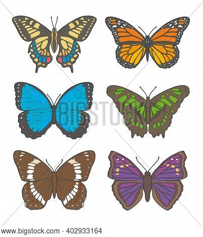 Vector Illustration Drawings Of Different Butterflies, Including 'white Admiral', 'old World Swallow