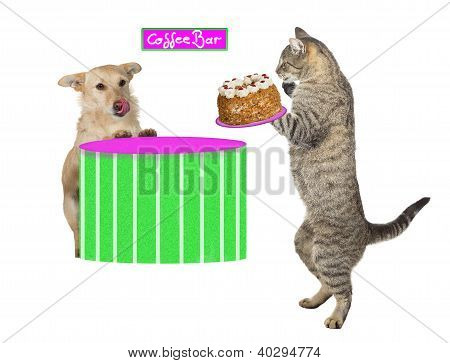 Kitty Serving A Dog A Cream Cake