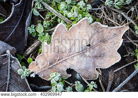 Abstract frozen autumn oak leaf on ground in forest