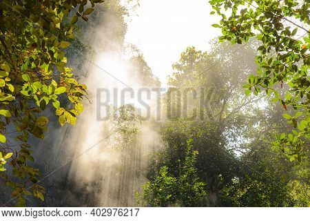 Rays Of Sunlight Breaking Through The Fog With Leaf On Foreground In The Forest. Nature Background C