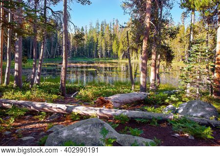 Picturesque quiet lake in a coniferous forest. Sunrise. The Tioga Road and Pass in Yosemite Park. USA. North America