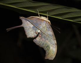 grün Schmetterling auf den Kopf