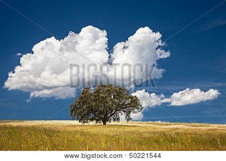 Tree In Field