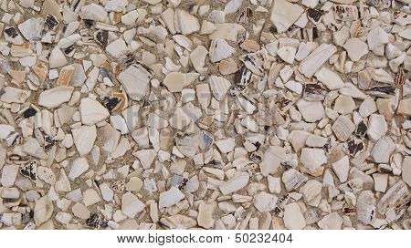 Crushed Sea Shell Background