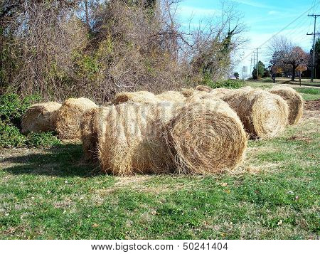 Hay Bails for horses