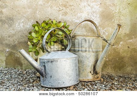 Potted Plant In Old An Galvanised Teapot