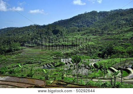 Rice fields Background