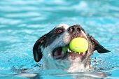 a dog swimming in a public pool poster