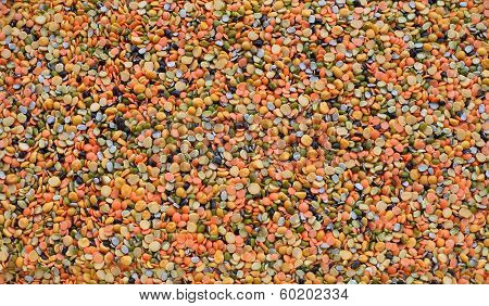 lentil seamless texture