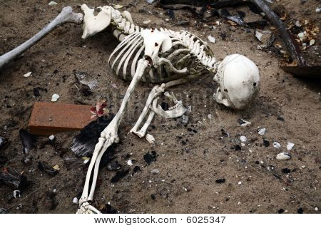 Skeleton In Dirt. Bones And Skull From Human Or Dead Man