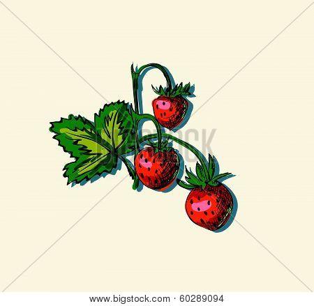 Vector illustration of strawberry