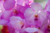 Collection of orchid flower on green back ground, close up orchid flowers , beautiful flowers in the garden poster