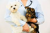 Veterinary treatment - lovely puppies and friendly veterinary poster
