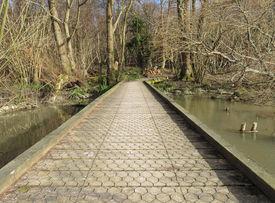 Boardwalk through woodland