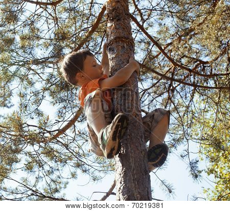 little cute boy climbing on tree hight poster