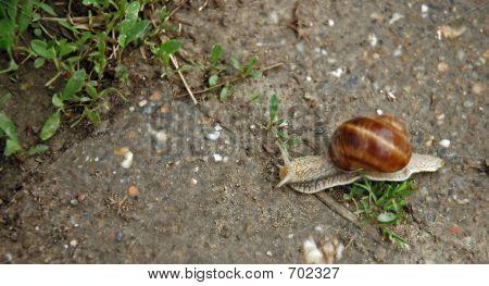 Snail Blazer