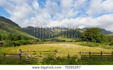 Daisy field with mountains blue sky and clouds scenic Langdale Valley Lake District Cumbria