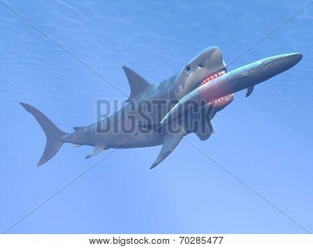 Megalodon shark eating blue whale - 3D render