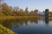 Park in the city. Wild duck swiming in pond at spring time. Moscow Russia. poster
