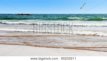 The Beautiful Beach, Stones In The Water, Seagull Above