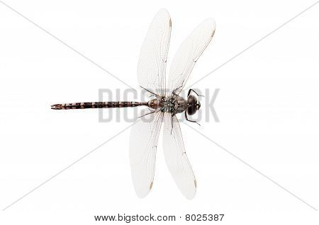 poster of isolated top view dragon fly on white background