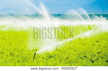 Farm Field Irrigation
