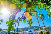 Welcome in California. Sunny California Landscape Palms and Orange Tree. poster