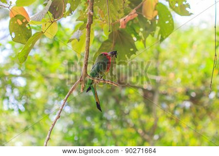 red beard bird perching on the tree