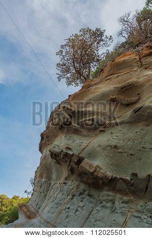 Lone Tree Growing On A Beautiful Rock