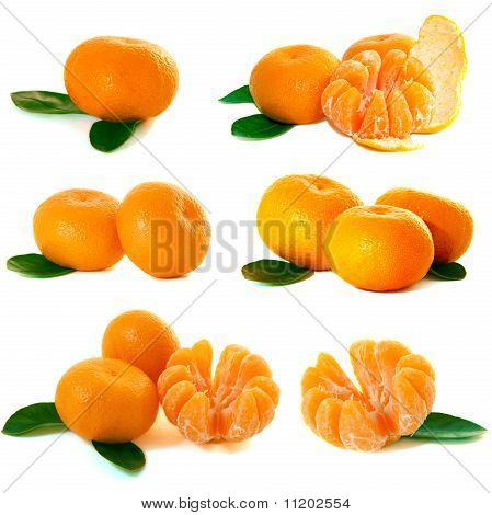 Mandarins Collection
