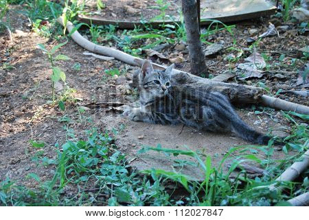 Tabby Cat Lying On A Stone In The Grass Under Semidarkness