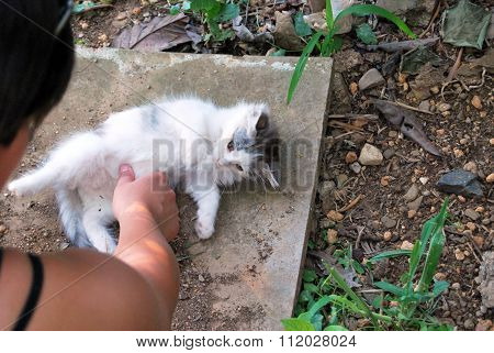 White Kitten Playing On The Ground With Finger And Hand
