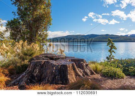 Lake Te Anau With Big Tree Stump On The Foreground, Fiordland, New Zealand