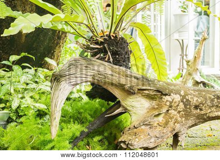 Minimal Garden With Variety Tropical Plant
