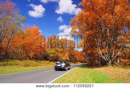 scenic drive in Orange Yellow Fall Foliage colors of Maple tree in Autumn