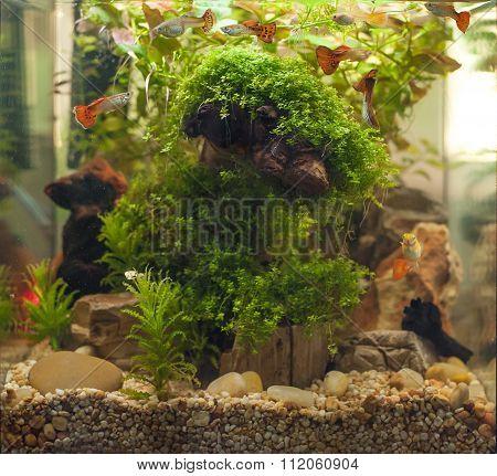 Aquarium Fishes. Bellyfishes.