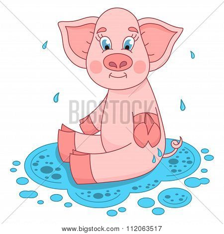 Cute pig in a puddle sits and smile on water puddle