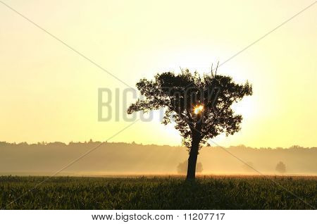 Landscape of summer sunrise
