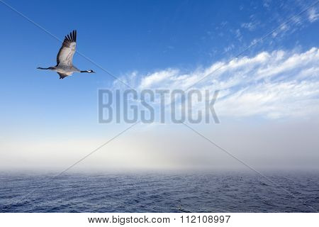 A single crane in migration.
