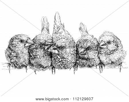 Japanese finch. Vector illustration isolated on white