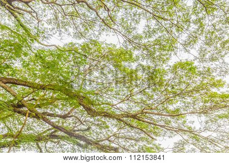 Tree Branch Of Green Leaves On A Big Tree, Nature Background