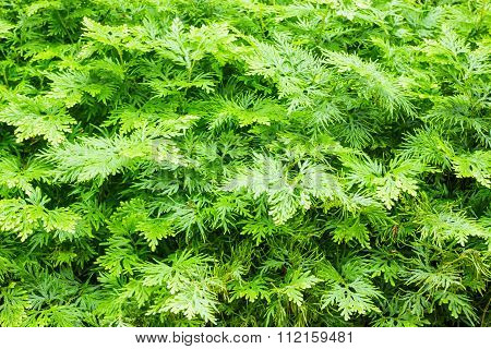 Green Tropical Plant In The Garden