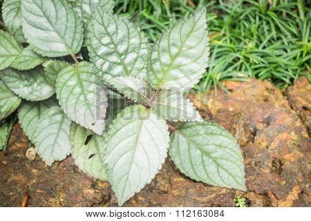 Minimal Garden With Green Plant