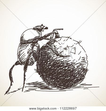 Sketch of dung beetle, Hand drawn illustration