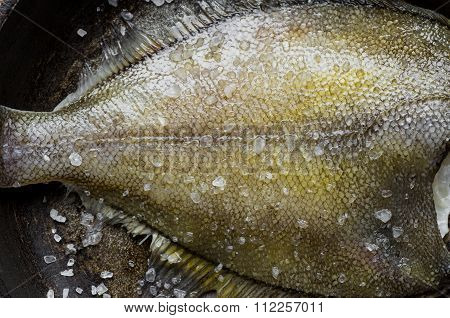 Freshly Caught Flatfish In A Pan With Salt