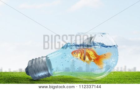Little goldfish in light bulb wearing shark fin